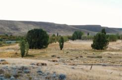 Campo en Ruta Nacional 40